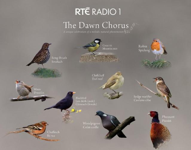 RTBF : La Prem1ère participe au 'Dawn Chorus'