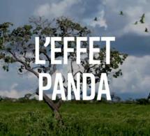 """Le WWF France lance sa série de podcasts : """"L'Effet Panda"""""""